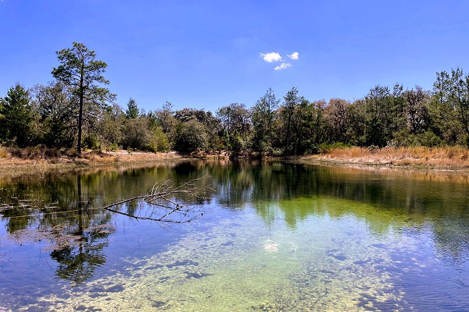 Hidden Pond from Pat's Island Trailhead