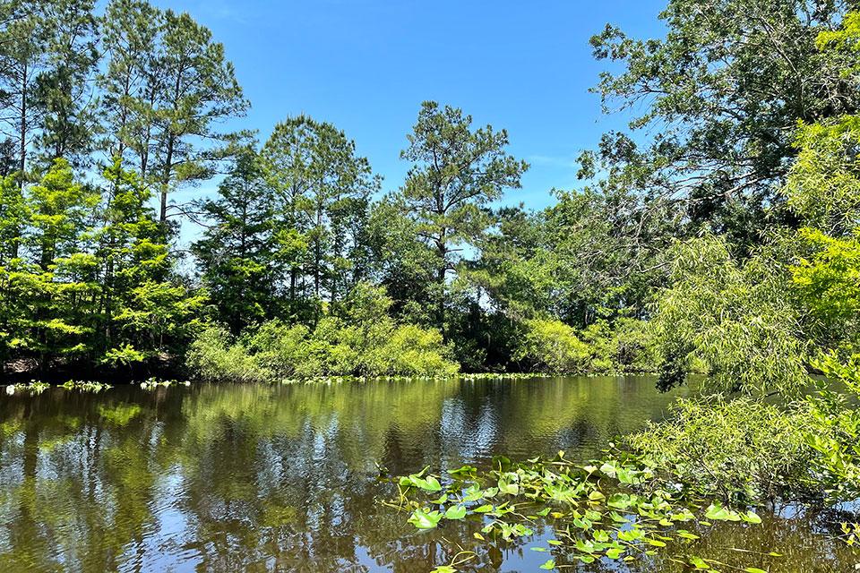 Ocklawaha River at Ocklawaha Prairie Restoration Area