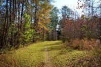 Equestrian trail at Ocklawaha Prairie Restoration Area in Ocala