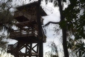 Observation tower at Paynes Prairie