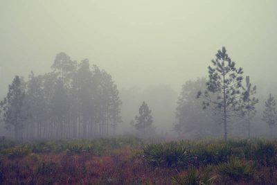 Winter fog at Longleaf Flatwoods Reserve