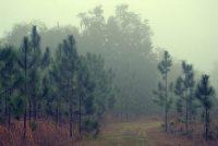 Trail at Longleaf Flatwoods Reserve
