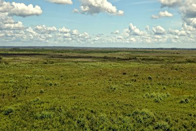 View from observation tower at Paynes Prairie in summer