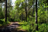 Hiking and horseback riding trail through Orange Creek Conservation Area near Citra in Marion County Florida