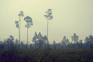 Hiking Longleaf Flatwoods Reserve on a Foggy Winter Morning