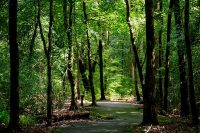 Paved trail through woods at Little Tallapoosa Park