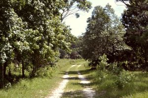 Chacala Trail changes rapidly if you pay attention