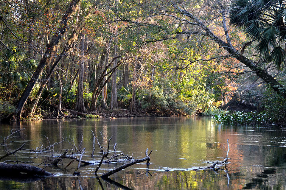 Ocklawaha River in Ocala National Forest