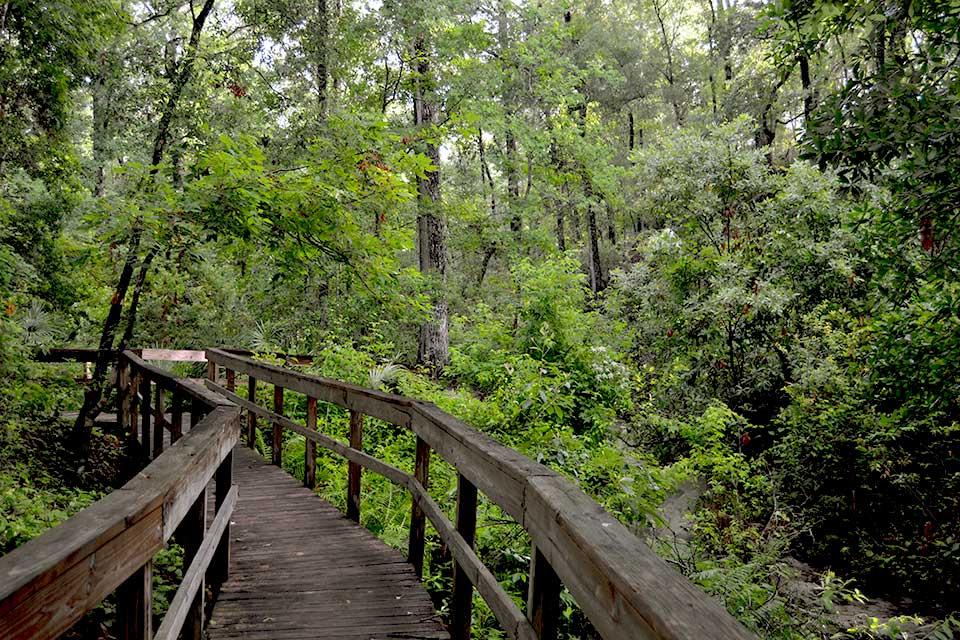 Boardwalk of Gold Head Branch Springs