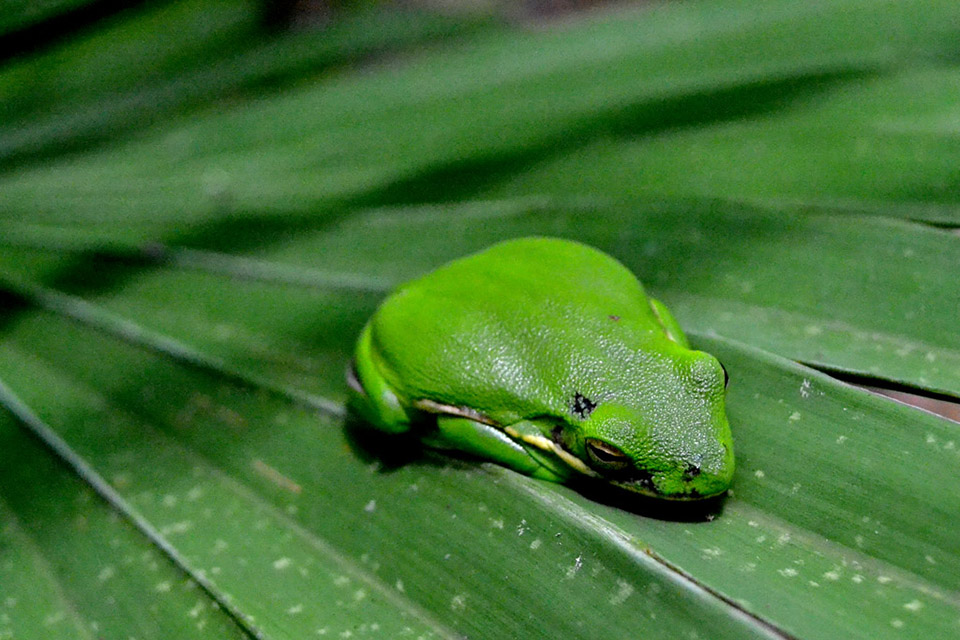 Tree frog on palm