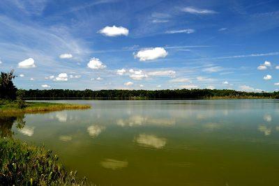Lake Wauburg at Paynes Prairie in summer