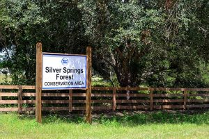 Silver Springs Forest Conservation Area main entrance and parking at FL 326 entrance, where the map below takes you. There is a rear entrance on Florida 315 as well, 29.229056, -82.010071