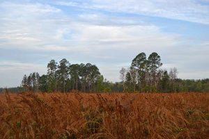 Prairie on hike in Palatka, Putnam County, Florida