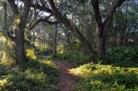 Wooded trail at Indian Lake State Park