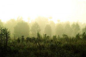 Golden Sunrise in Florida, Silver Springs Conservation Area near Ocala