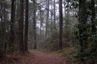 Hiking San Felasco Hammock Preserve State Park near Gainesville, Florida