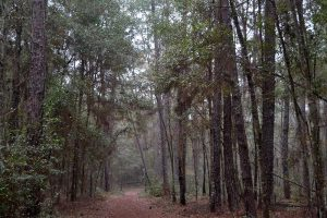 Dense subtropical forest hammock with an easy to follow hiking trail