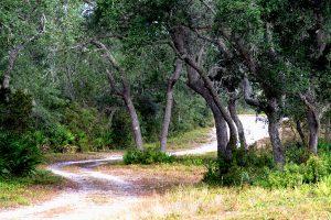 Sand trail through trees