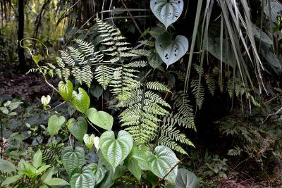 Ferns and vines are reminiscent of a garden area