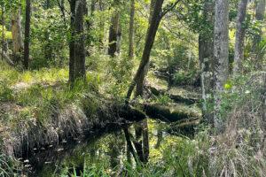 Creek at Newnan's Lake Restoration Area