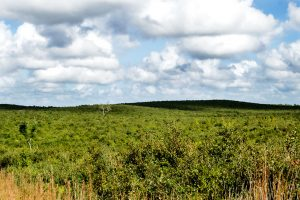 Sand hills covered in green