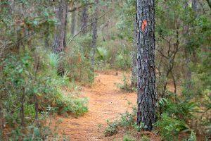 Florida Trail in Marion Oaks, Florida