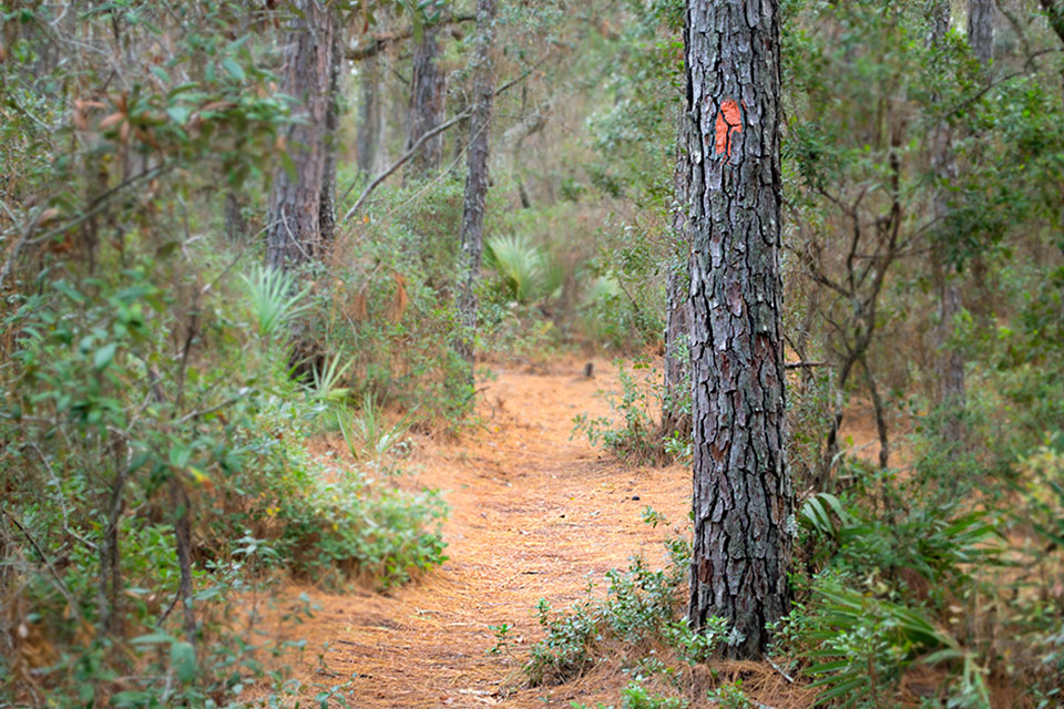 Florida Trail in Marion Oaks, Florida