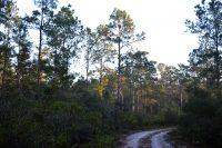 Sunrise on Gores Landing hiking trail