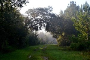 Spanish moss dangles from an arch of trees along the trail