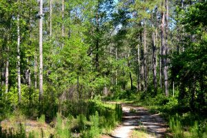 Hiking Trails wind through Belmore State Forest with plenty of birding opportunities