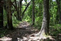 A nice section of trail at Bivens Arm Nature Park in Gainesville, Florida