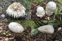 Following heavy rains, mushrooms appeared in a variety of unusual shapes