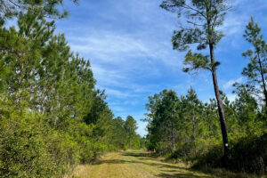 Trail at Newnan's Lake Restoration Area