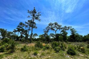 Open prairie at Ocklawaha Prairie Restoration Area