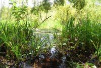 Wetlands at Bivens Arm Nature Park