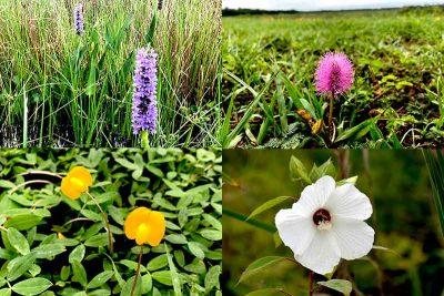 Various colorful wildflowers