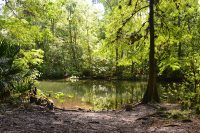The trail spills suddenly upon the Ocklawaha River