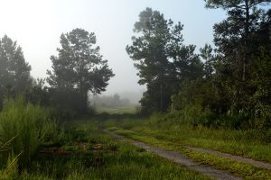 Into the mist at Silver Springs Forest Conservation Area