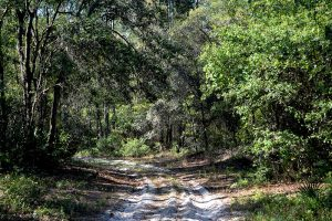 Sweet sand on some trails may prove prohibitive to enjoyable biking, but there are other trails to choose from