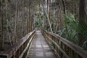 Swamp Trail Boardwalk