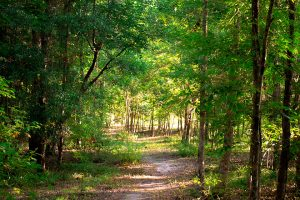 Kathy Cantwell Trail