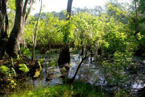 Little Orange Creek Reserve, Hawthorne