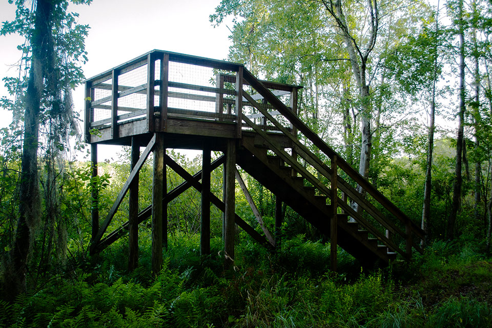 Viewing Platform at Little Orange Creek Reserve in Hawthorne, Florida