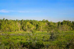 Prairie at Little Orange Creek Reserve