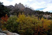 Autumn Foliage in High Desert