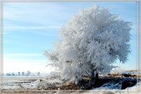 Tree Frozen in Ice on a Sunny Day in Nebraska