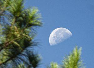 Half moon over pines