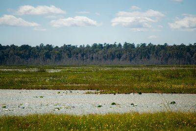 Ledwith Prairie at Barr Hammock Preserve