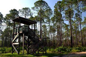 Observation tower at Bayard Conservation Area