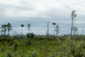 Lake Blossom Trail, Florahome, Florida